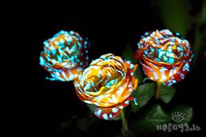 Светящиеся цветы